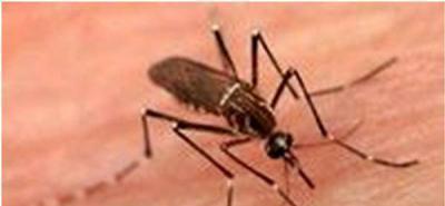 El dióxido de carbono de la respiración es lo que atrae a los mosquitos