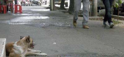 Tanto en el Sector Comercial como en algunos barrios de Barrancabermeja es cada vez más común que los perros y gatos sean abandonados en las esquinas, aumentando las cifras de animales domésticos callejeros.