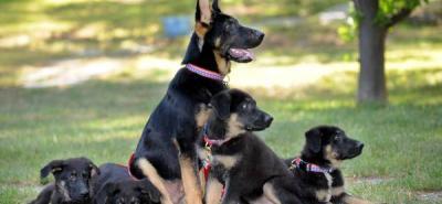 N.Y. rinde homenaje a los héroes caninos del 11-S