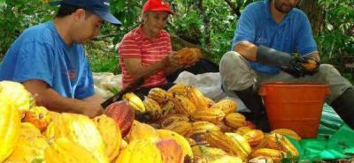 Terminó último ciclo del programa de cacao