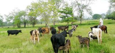 Fondos ganaderos  a vigilancia especial