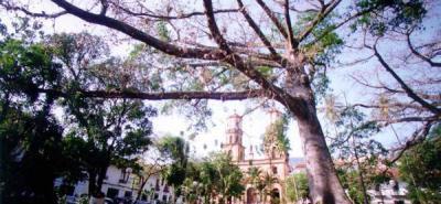 ICA valora tipo de larva que desfolia árboles
