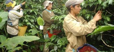 Federecafé resalta sector caficultor santandereano