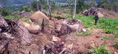 Alertan deforestación de 1,5 millones de hectáreas en 2005-2010