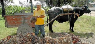 Terminó huelga en palmas Bucarelia de Puerto Wilches
