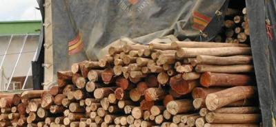 Cdmb combate explotación ilegal de madera en la región