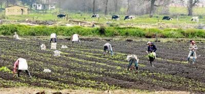 Agricultores podrán importar directamente fertilizantes y agroquimícos