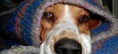 Perro cuidó durante una semana a su compañera muerta