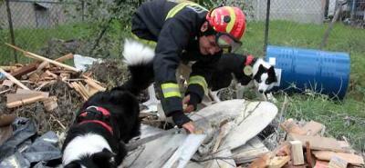 Perros que salvan vidas y encuentran direcciones
