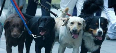 Con una cinta amarilla, los perros piden que los protejan