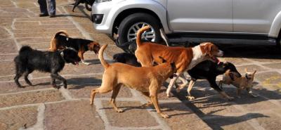 Crean prueba para brucelosis canina
