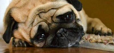 Síndrome de abandono, el cuadro que podría afectar a tu mascota si la dejas mucho tiempo sola