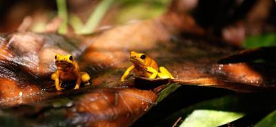 Indígenas amazónicos cambian prácticas en defensa de la biodiversidad