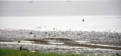 Donde antes el agua llenaba el área de la ciénaga El Llanito ahora se observan playas y mesetas en las que se observan garzas y los bovinos pastan.