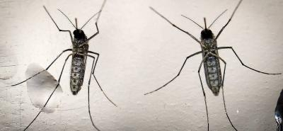 Mitos y realidades sobre el zika