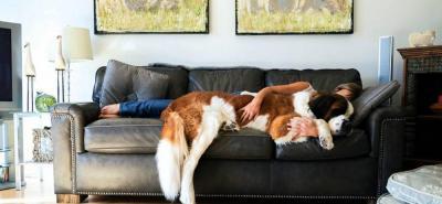 ¿Qué hacer para que su casa no huela a mascota?