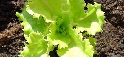 Cultive verduras con sobrantes de cocina