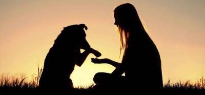 Una vez superada la pérdida, abrir su corazón para adoptar a otra mascota, pero eso sí, no le ponga el mismo nombre. Conserve los recuerdos de su mascota y cree nuevos con quien será bienvenido ahora en su hogar. ara llevar el duelo por la muerte de la mascota.