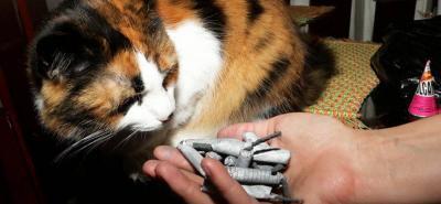 ¿Por qué las mascotas le temen a la pólvora?