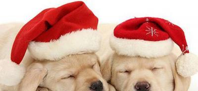 Los errores más comunes que cometen los dueños con sus mascotas en Navidad