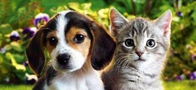 Claves para adoptar una mascota