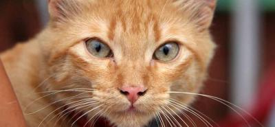 El reto de alimentar a una superpoblación de gatos