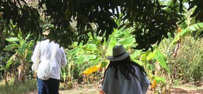 Muerte de 11 indígenas en la Sierra Nevada de Santa Marta fue por gripa