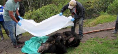 Inicialmente se informó que el asesinato del oso habría ocurrido el pasado viernes 17 de marzo.