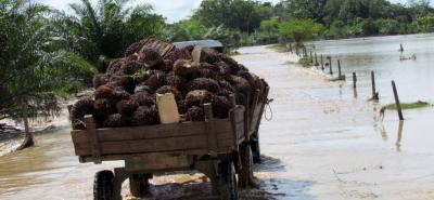 """Según el Minagricultura, se debe dejar de ser """"apostadores del agro"""" y trabajar asegurados. Para tal fin, el Gobierno subsidia el 80 % de la prima del seguro a pequeños cultivadores."""