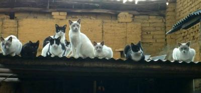 'Se mueren en nuestras manos': dueños de gatos envenenados en Bucaramanga