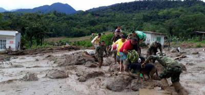 Recogerán tapas plásticas en Bucaramanga para ayudar a mascotas de Mocoa