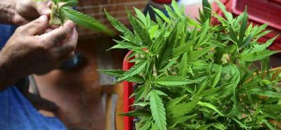 El Gobierno Nacional emitió el decreto mediante el cual se regula el uso, producción y comercialización del cannabis y sus derivados para uso medicinal en el país.