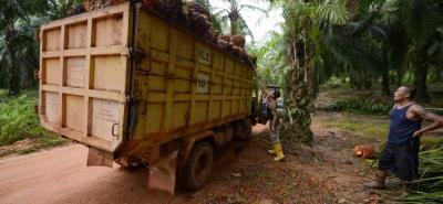 De seguir los problemas de orden público en Tumaco, el futuro de la actividad palmera en esa zona está en entredicho.