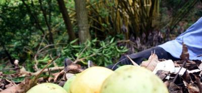 Cuando bajaba mangos de un árbol, los cuales vendía para su sustento, un hombre de 62 años de edad cayó de casi tres metros de altura. Su muerte se produjo minutos después.