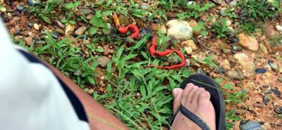 El pasado sábado, cuando caminaba por una trocha de la zona rural de Cantagallo (Bolívar), un niño de 11 años de edad fue mordido por una serpiente. Luego de haber sido atendido en Barrancabermeja y posteriormente trasladado a Bucaramanga, el martes murió.