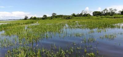 Las Salinas es una región de tierras muy fértiles pero amenazadas por el río Magdalena. Las siembras de arroz se catapultaron en esa zona de Santander desde hace 3 años. Igualmente, en la parte baja de Sabana de Torres se están afectando los cultivos de palma aceitera.