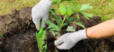 El próximo 24 de junio se realizará una jornada gratuita de siembra de árboles.