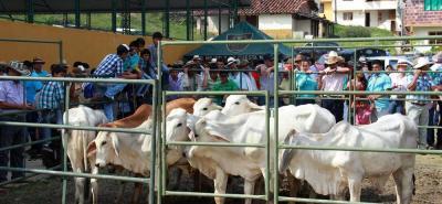 Para el ICA, los animales afectados en Tame, Arauca y Yacopí, Cundinamarca, son de origen externo y al parecer llegaron de  contrabando desde Venezuela.