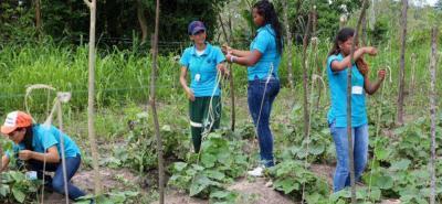 La unidad productiva establecida en Puerto Cayumba beneficia a 100 personas de esa comunidad.