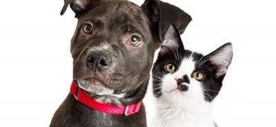 Lo que revela el comportamiento de las mascotas