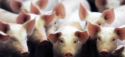 Antioquia y la Costa Atlántica son las dos zonas de Colombia con el mayor consumo de carne de cerdo.