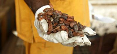 La mayor producción de Costa de Marfil, Nigeria y Camerún llevó a que el mercado externo se saturara y los precios cayeran.