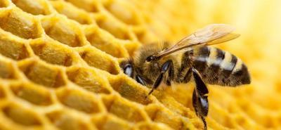 Alerta por nuevo caso de abejas muertas por plaguicidas en Santander