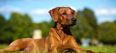 Aprenda cómo calcular la edad de su mascota
