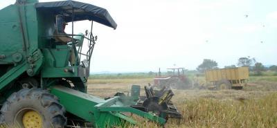 De acuerdo a las proyecciones de Fedearroz, al cierre de 2017 se tendría una cosecha de 3 millones de toneladas de arroz paddy verde (con cáscara).