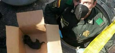 Rescatan de una alcantarilla en Floridablanca a 2 perritos recién nacidos y su madre