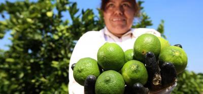 En Colombia solo se usa el 30% de la tierra que es apta para el desarrollo agrícola y la producción de alimentos.