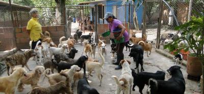 Organizan recolección de ayudas para animales sin hogar de Bucaramanga
