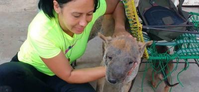 Piden ayuda para salvar la vida de un perro con cáncer en Bucaramanga