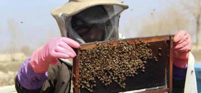 La gran mayoría de los cultivos que son de consumo humano necesitan de la polinización de las abejas para poder cuajar sus frutos.
